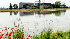 Azienda agricola NaturiAriatta