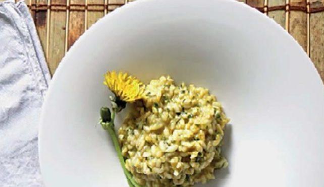 Risotto con i fiori gialli di tarassaco per la festa del riso a Merlengo