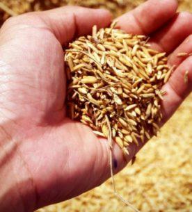 Il riso nella dieta dei malati oncologici