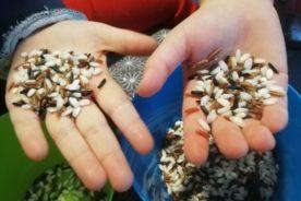 Ricexperience: tante attività didattiche e giochi con il riso. Ecco i travasi montessoriani