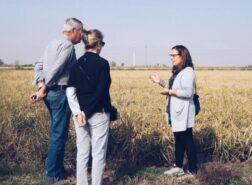 Una visita guidata nelle risaie