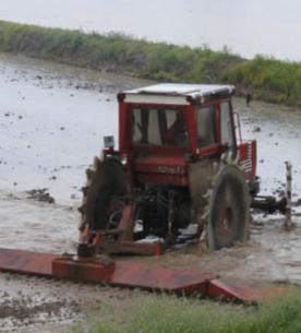Lavorazione in risaia