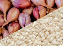 Il risotto allo scalogno di Romagna IGP